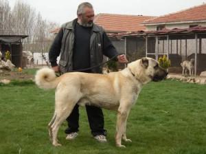Karakiz father